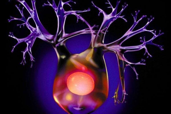 6 règles d'or pour que votre cerveau continue de fabriquer de nouveaux neurones